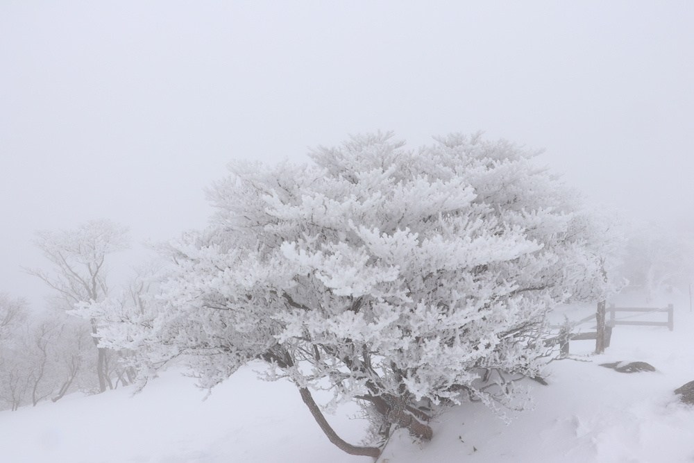 御在所岳の樹氷