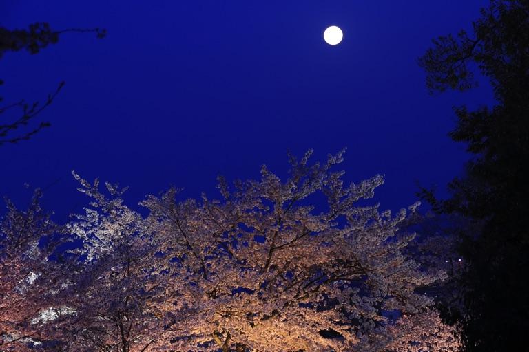 三井寺、桜のライトアップと満月