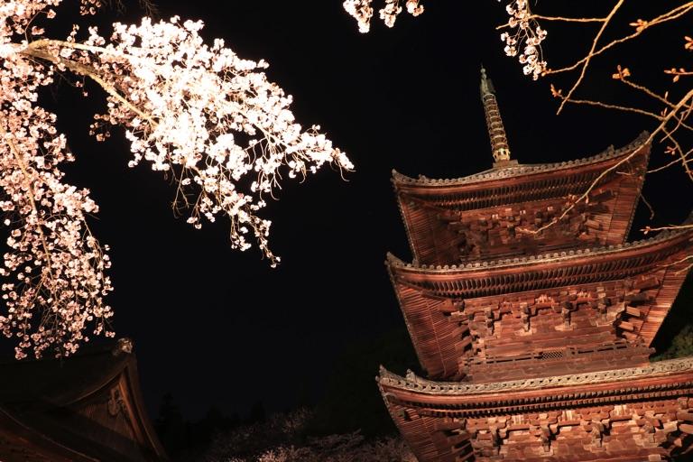 三井寺。三重塔と夜桜