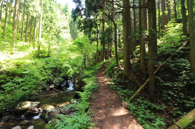 シワガラの滝 道中